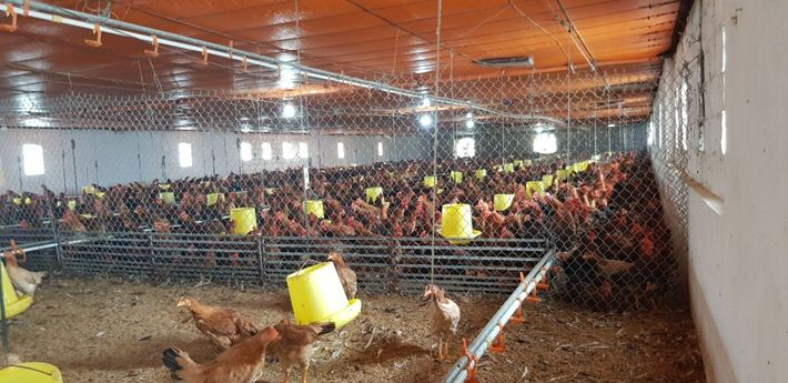Cùng nhìn ngắm mô hình nuôi gà tự động vô cùng hiện đại ở Đồng Nai