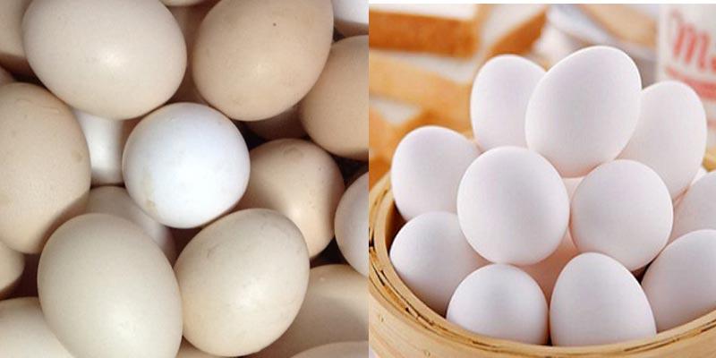 Vào những ngày gần đến trung thu giá trứng gia cầm tăng vọt
